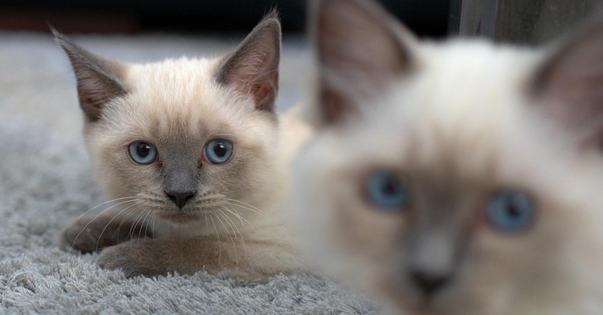 Due gattini che osservano