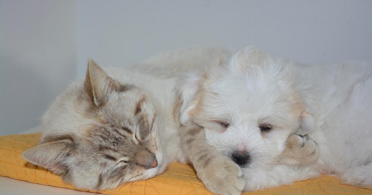 Gattino insieme ad un cagnolino