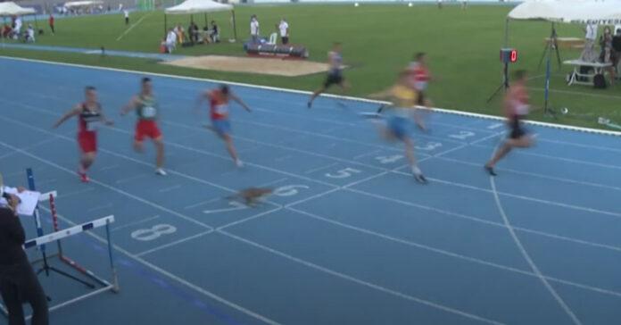 Gattino che attraversa la pista in una gara di corsa
