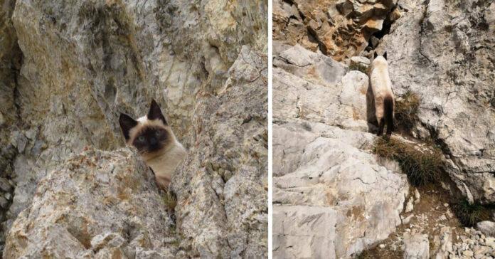 Gattino scalatore