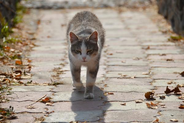 gatto che cammina per strada