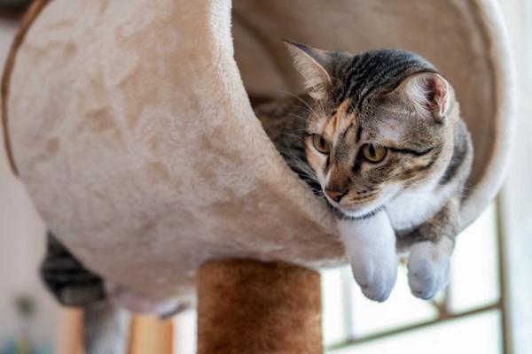 gatto sull'albero tiragraffi