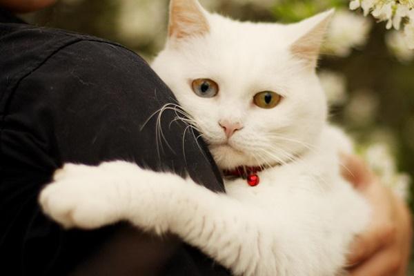 ragazzo tiene in braccio un gatto bianco
