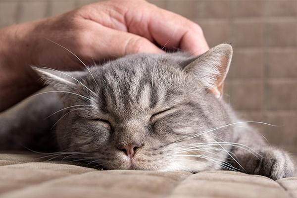 accarezzare il gatto sulla testa