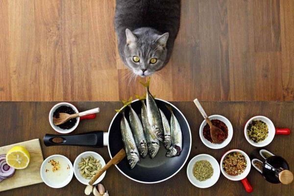 gatto e varietà di cibo