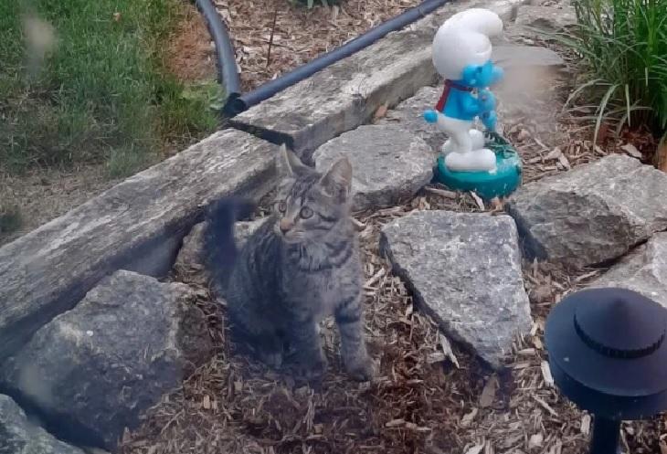 alvin salvataggio luogo segnalato gattino