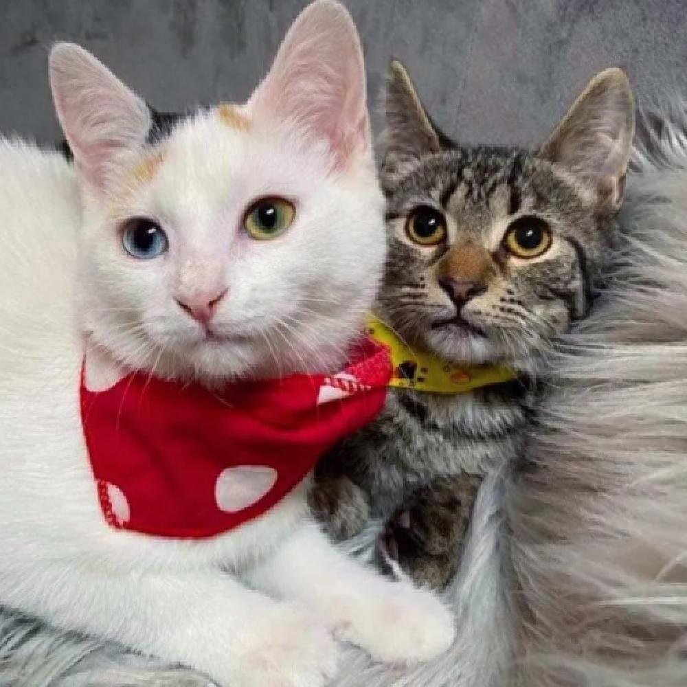 alvin e pippa gattini migliori amici
