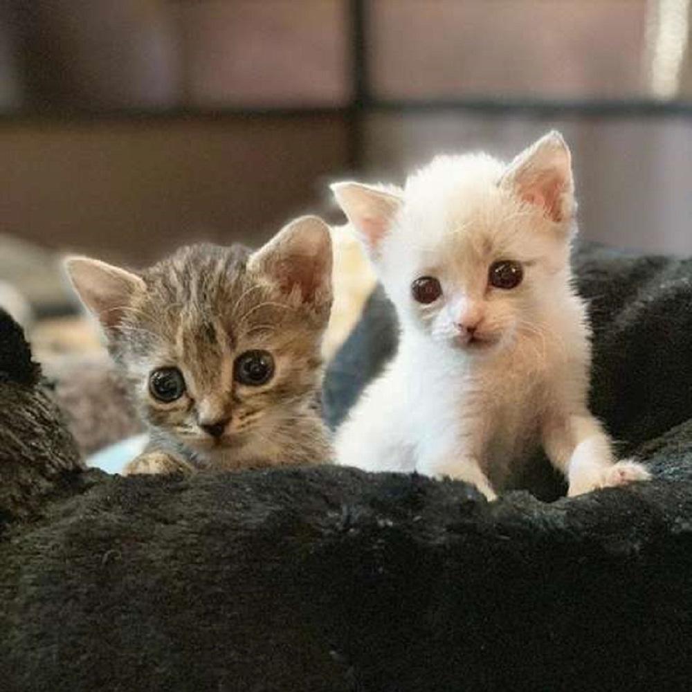 anna matty gatti adozione temporanea