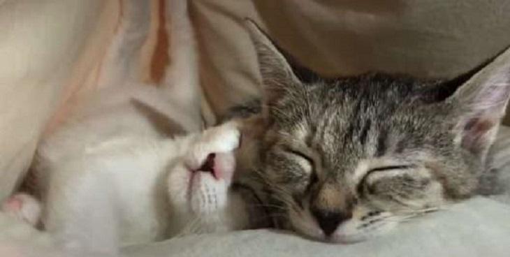 anna matty legame amore gattini