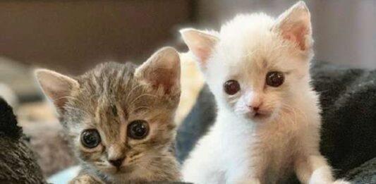 anna matty gatti abbandonati mamma vengono salvati