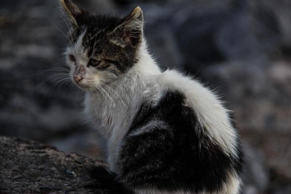 gatto randagio sporco