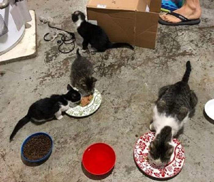 piccoli neonati mangiare