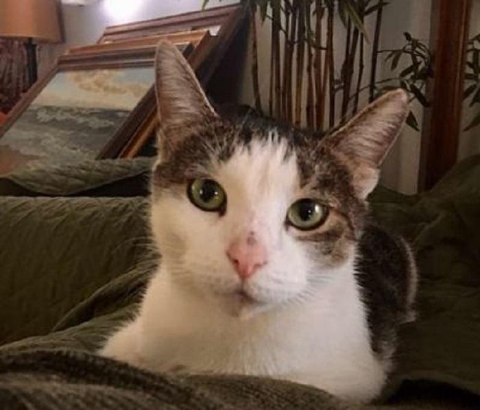 cucciolo gattino athena