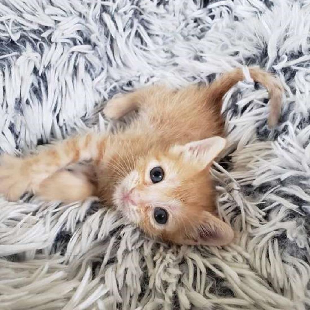 bean gattino conosce felicità adozione