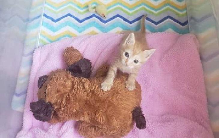 bean gattino lenta ripresa