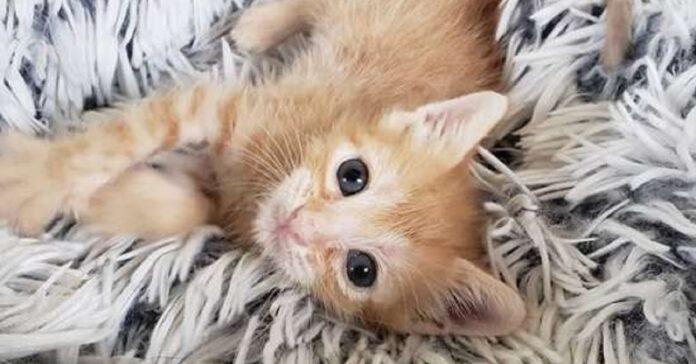 bean gattino salvato triste fine incontra madre