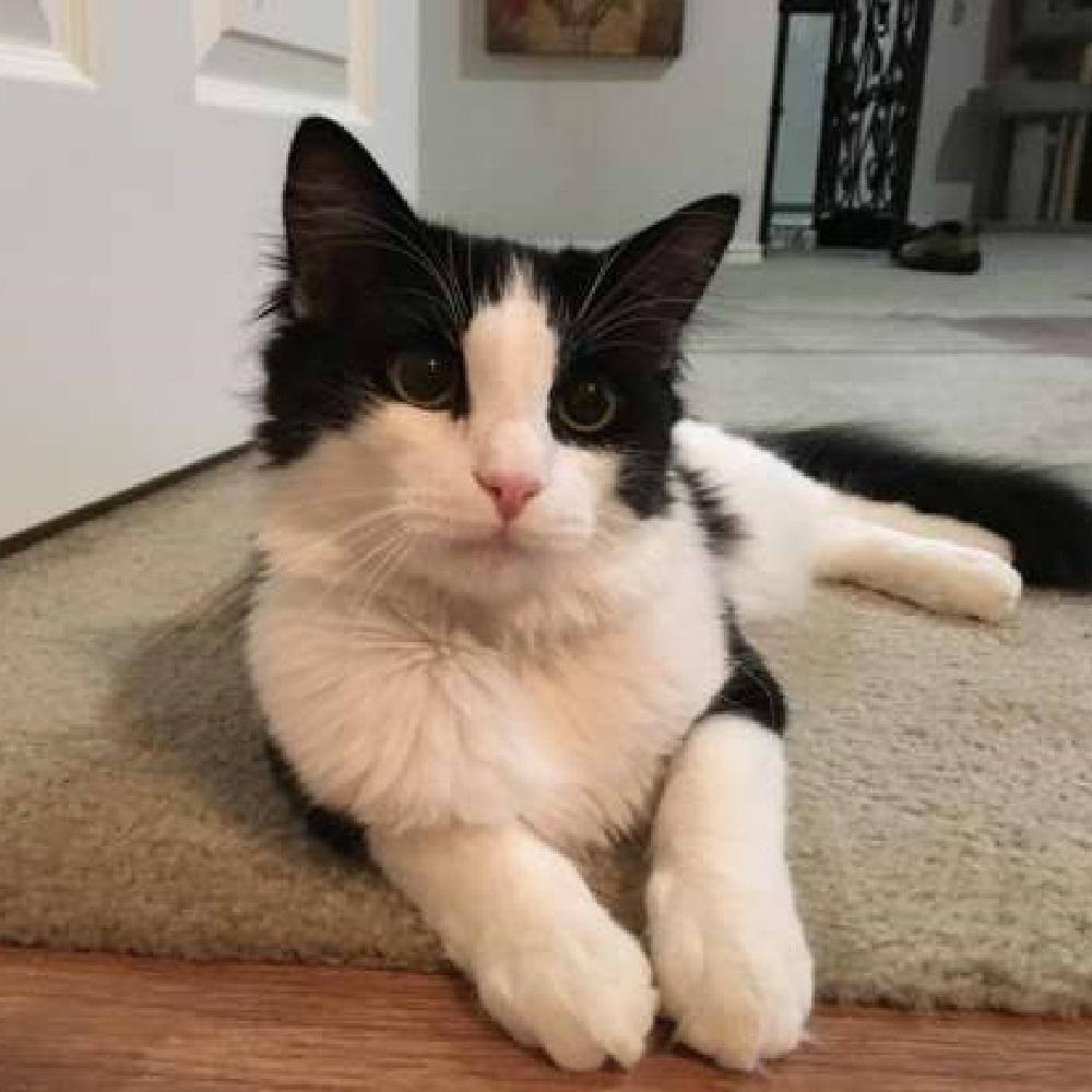 binx gattino intervento divino