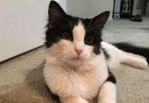 binx il gatto che trova casa bussando alla porta