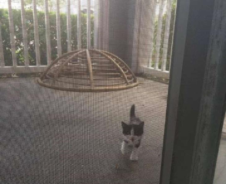 binx gatto si presenta fuori giardino