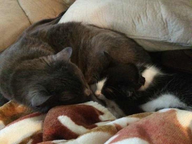 binx gatto incontra nickel 16 anni