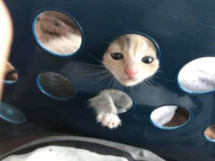 birdie gattino cresce casa coppia