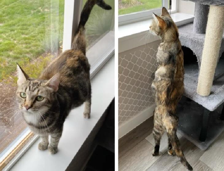 birdie gatta trovata fienile