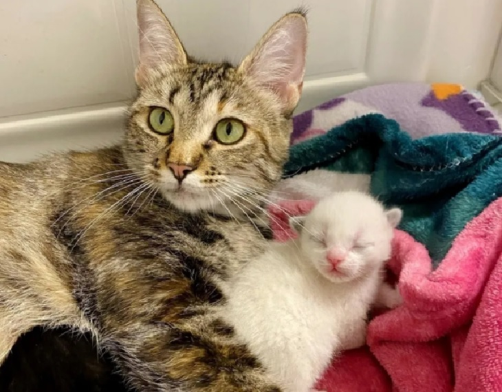 birdie gatta aspetta adozione piccoli