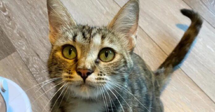 birdie la gatta salvata in un fienile partorisce 5 gattini