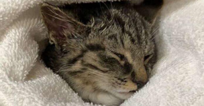 biscuit gattino salvato da una strada di campagna