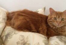 cal gattino ritrovato dopo 14 giorni dalla scomparsa