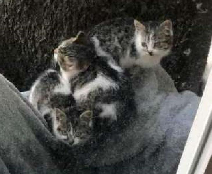 chunk chunk gattini rifugio