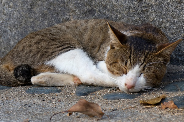 gatto randagio che dorme