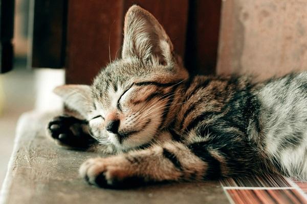 gattino che riposa