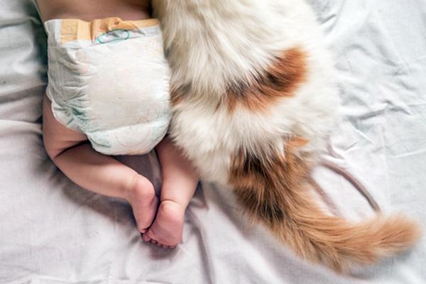gatto con un neonato