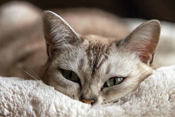 gatto che dorme sulla coperta