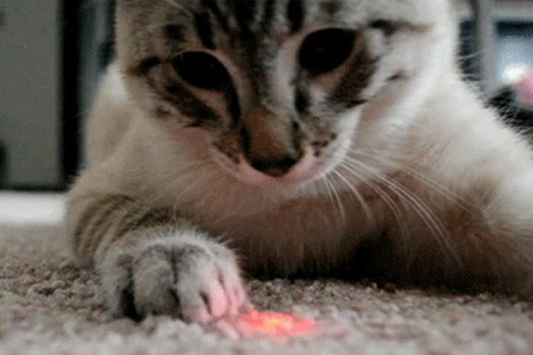 giocare con il laser