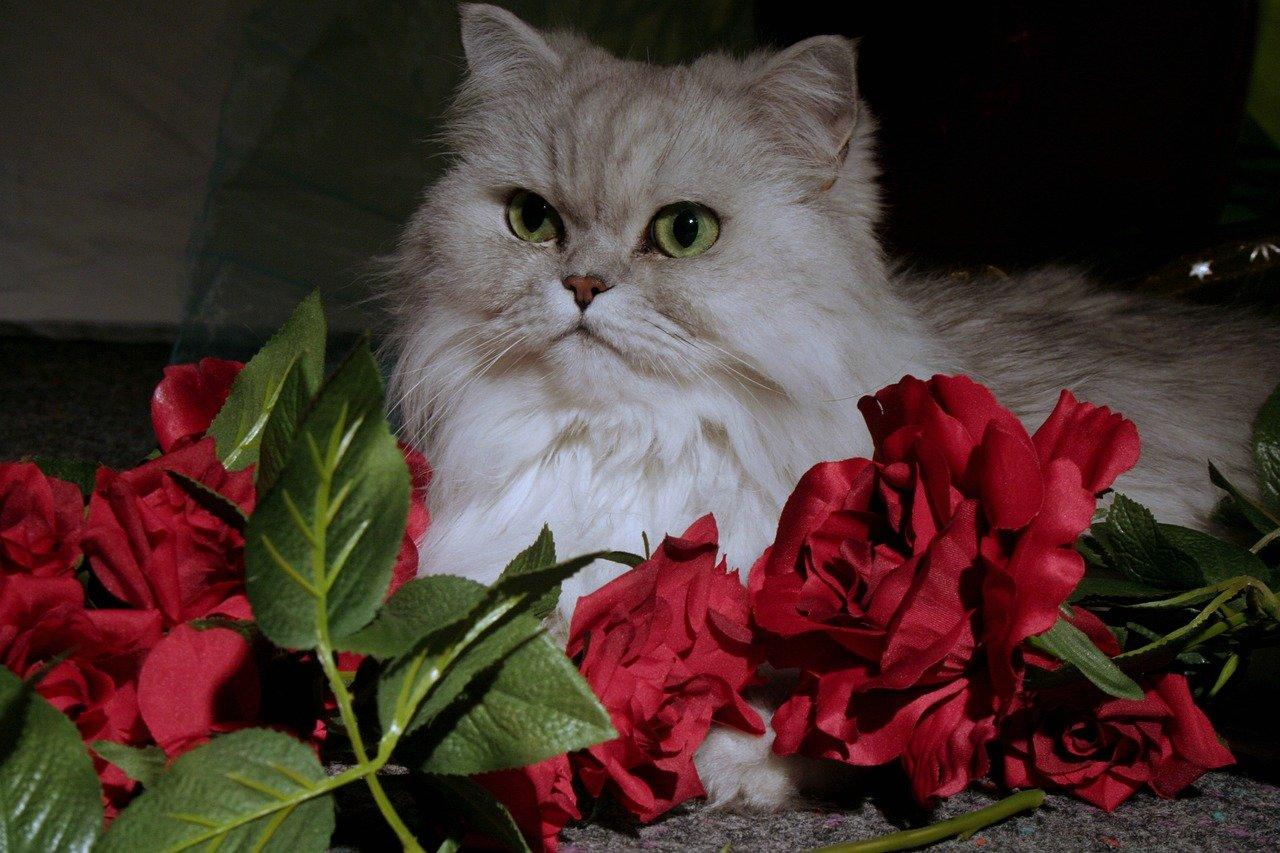 gatto persiano beato fra i fiori