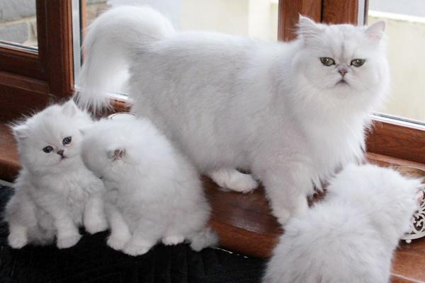 mamma gatta con i suoi gattini