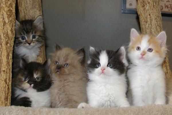gattini di vari colori