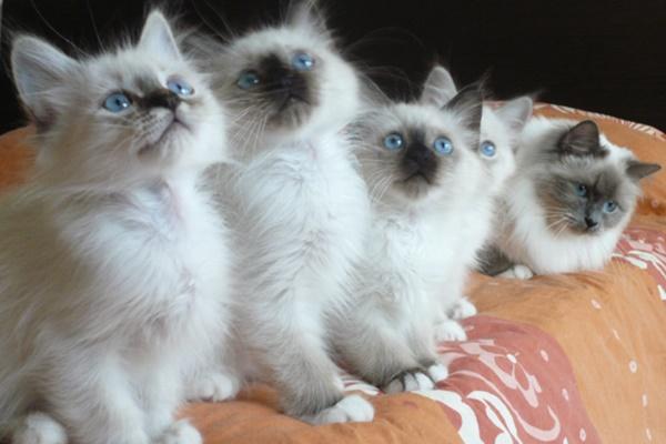 mamma gatta con i suoi cuccioli