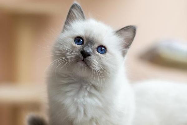 gattino con il musetto dolce
