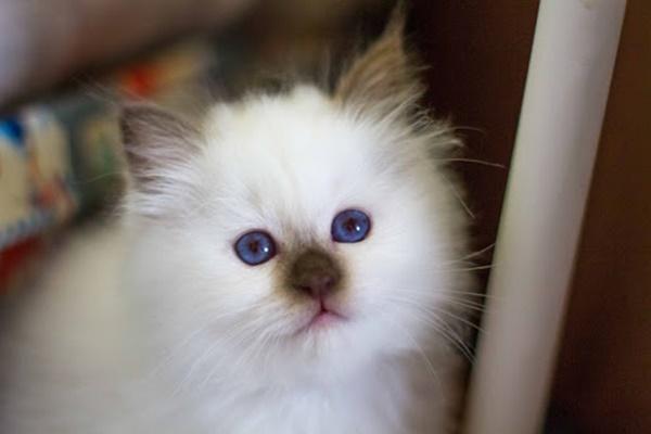 gattino con il naso scuro