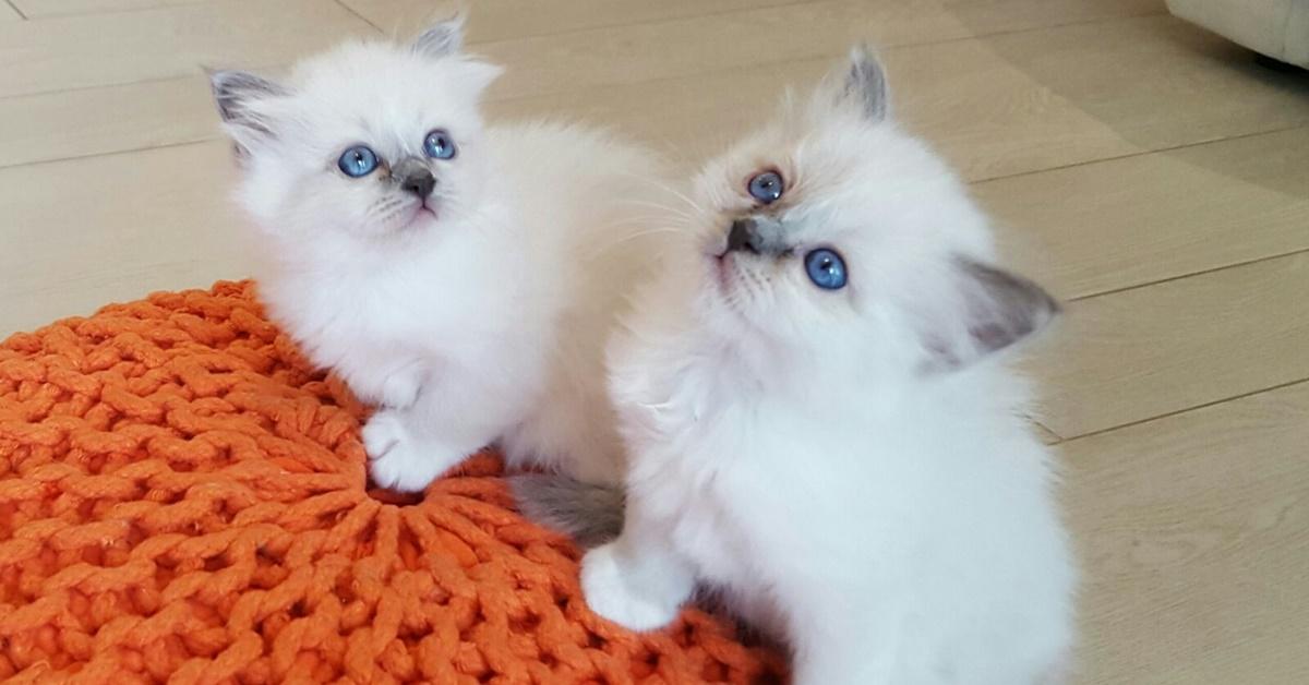 gattini che giocano sulla poltrona