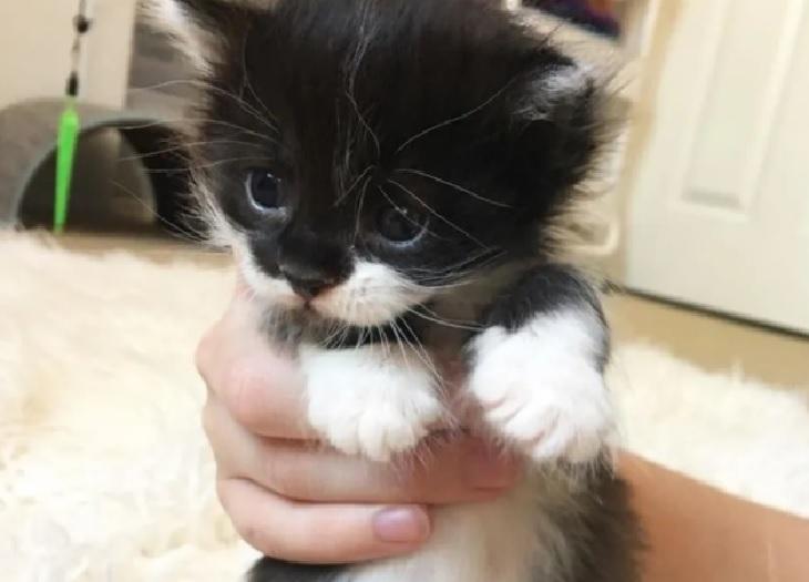 dalì gatto ashley accoglie casa