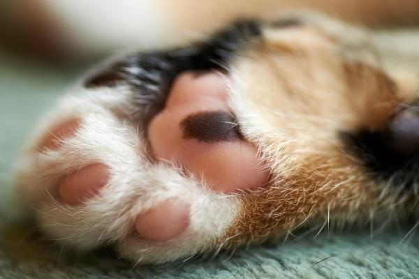 cuscinetti nelle zampe del gatto