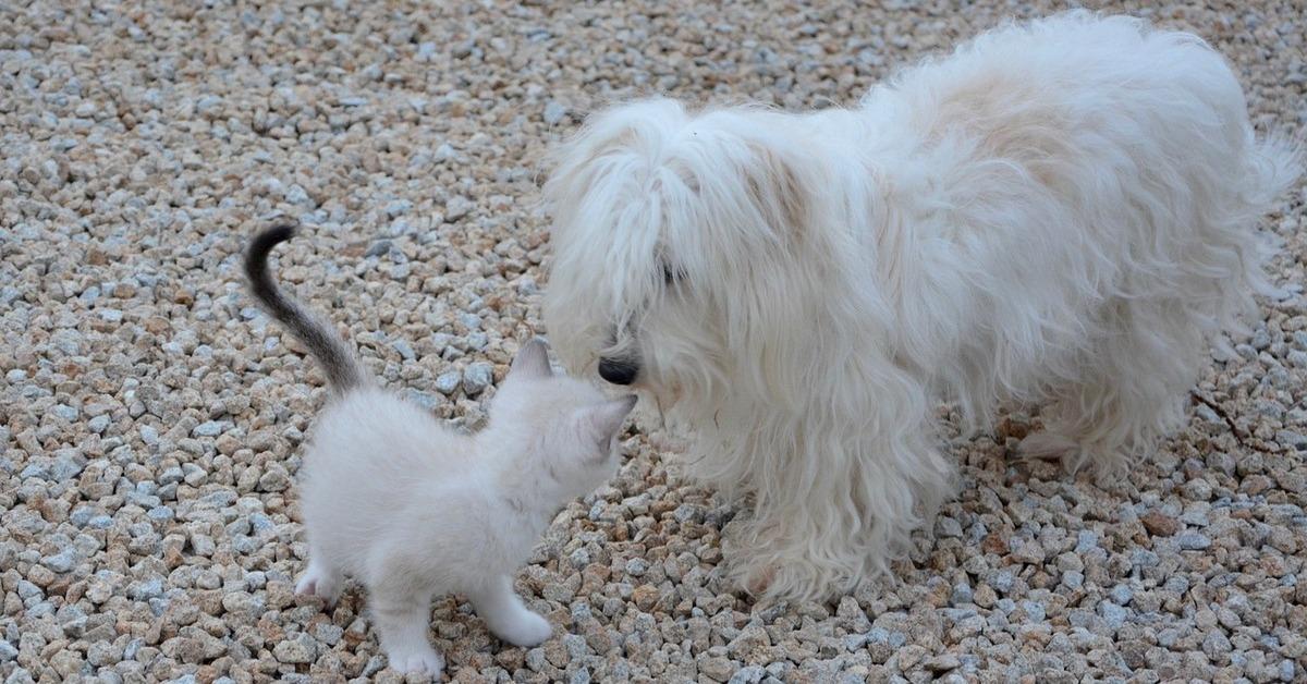 presentare un gattino a un cucciolo di cane