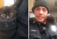 donut gattino nella neve salvato agente polizia