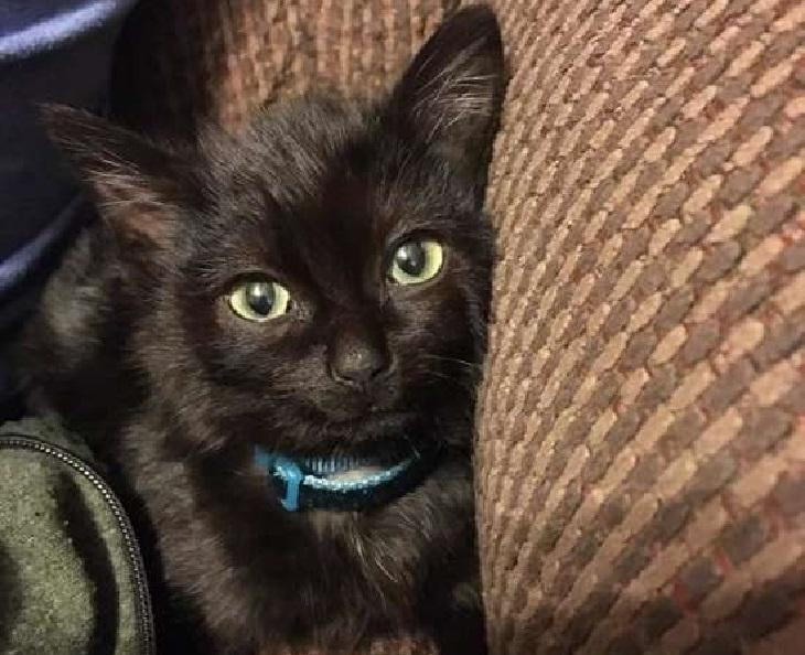 donut gattino amicizia con agente centrale