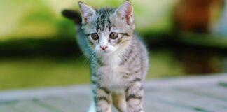monkey gattino salvato