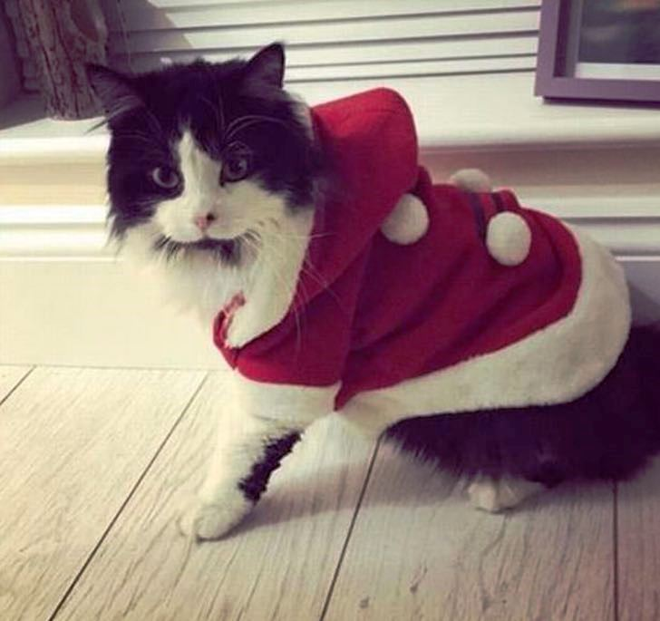 gattino jess foto